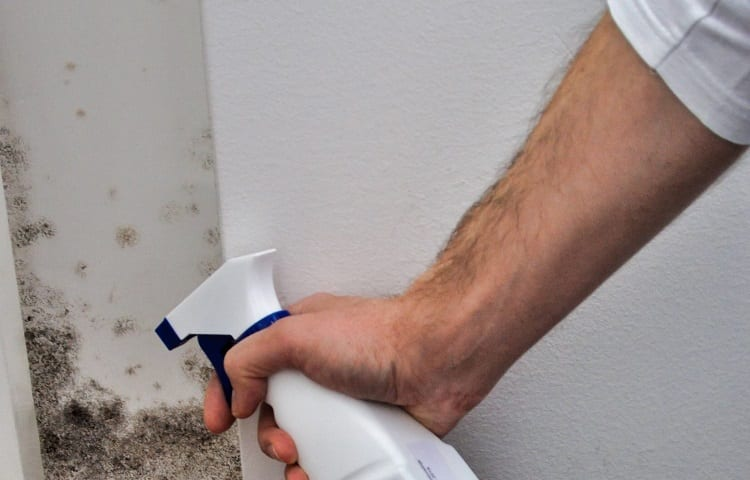 man spraying black mold