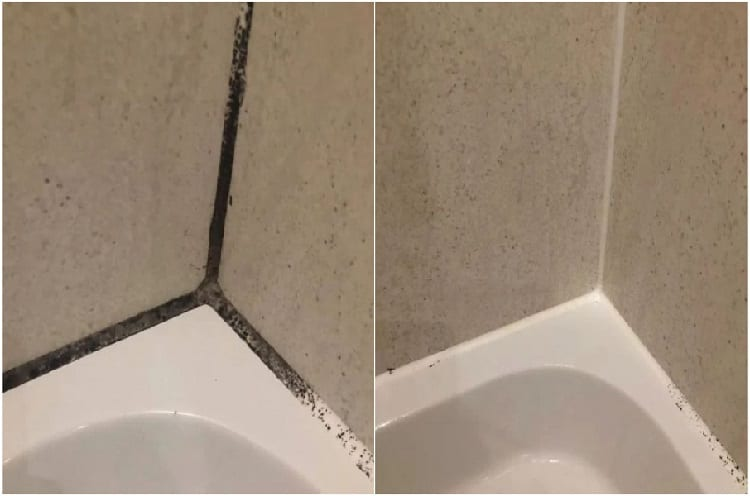 Clean Black Mold In Shower Silicone